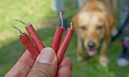 Edeka verkauft kein Silvester Feuerwerk: Tieren und Umwelt zuliebe