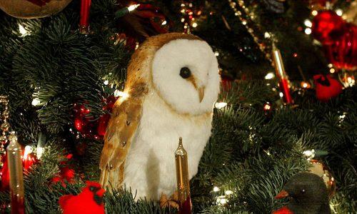 Weihnachtsbaum: Eule nistet sich unbemerkt ein