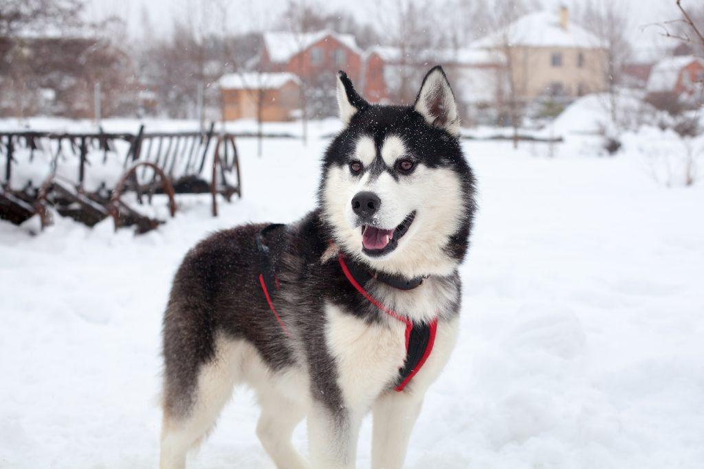 Hündin darf vor Tod noch einmal im Schnee spielen
