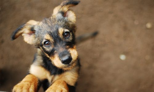 Hunde verstehen uns besser als gedacht
