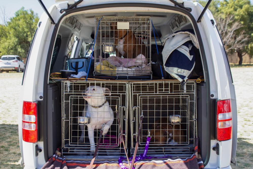 Kranke Haustiere: Illegaler Tiertransporter in Darmstadt gestoppt