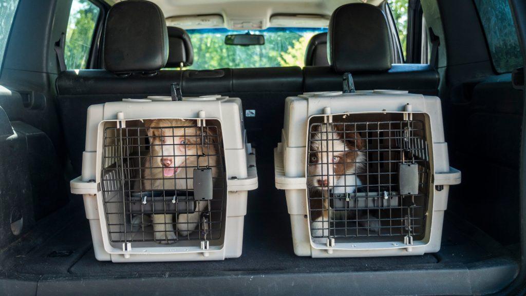 Kärnten: Polizei findet 27 Hundewelpen in Kofferraum