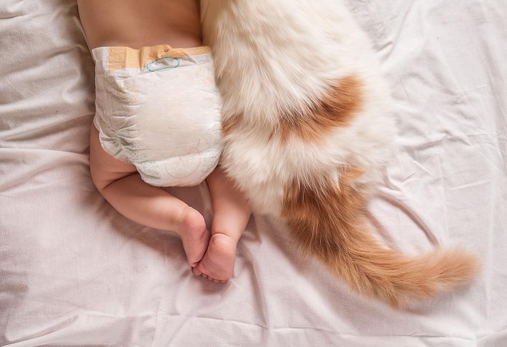 Katze tötet Baby: Sie legte sich auf sein Gesicht
