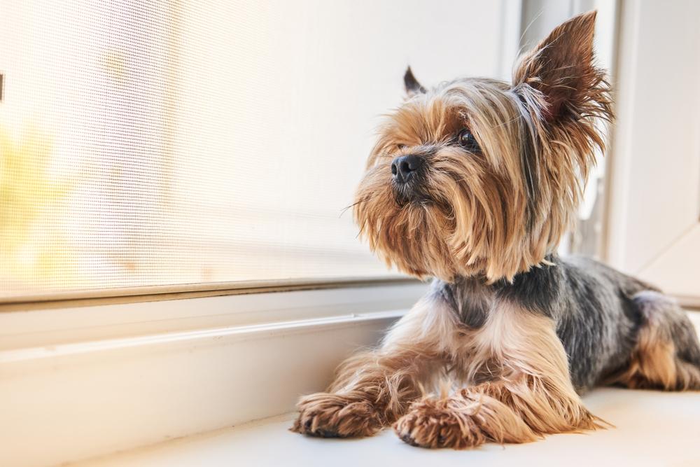 Streit mit Freundin: Mann wirft Hund aus dem Fenster
