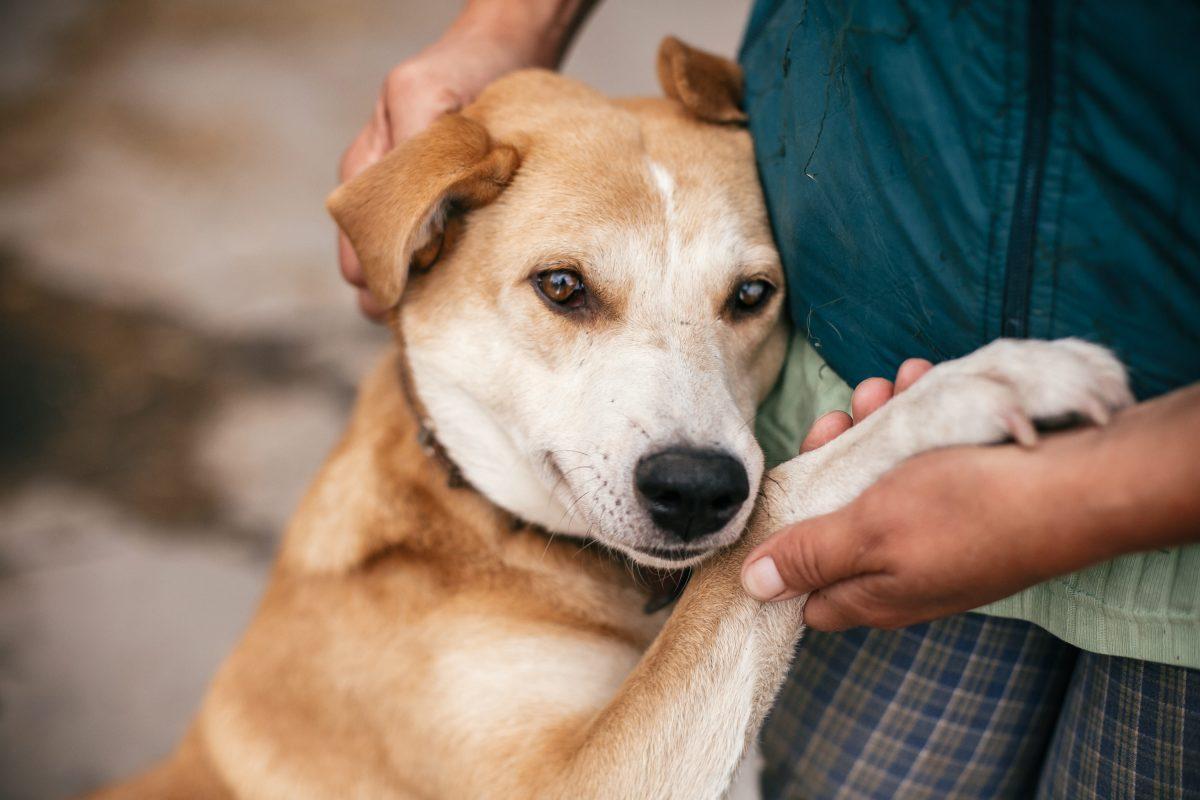 Nach 500 Tagen: Hund freut sich über Adoption