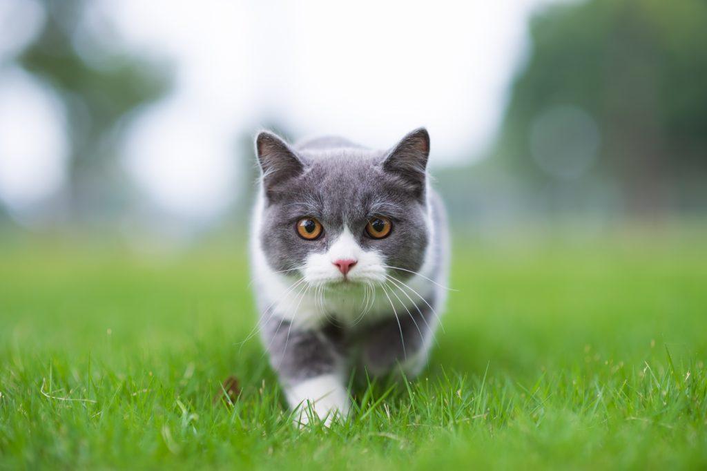 Niederlande: Juristen fordern Ausgangssperre für Katzen