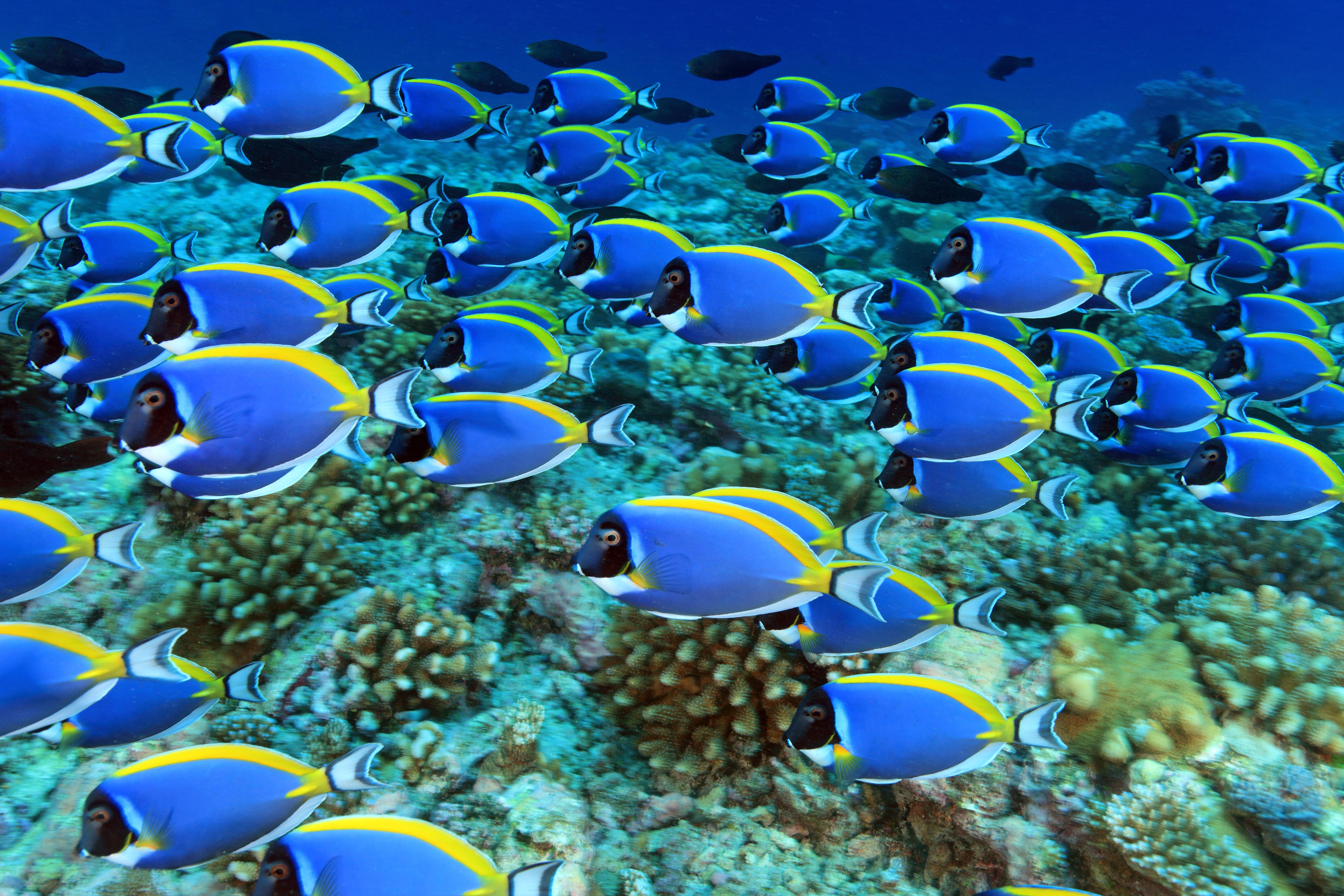 Sauerstoffverlust im Meer: Fische können nicht mehr atmen