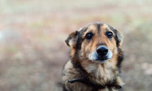 Video: Hund trauert um seinen toten besten Freund