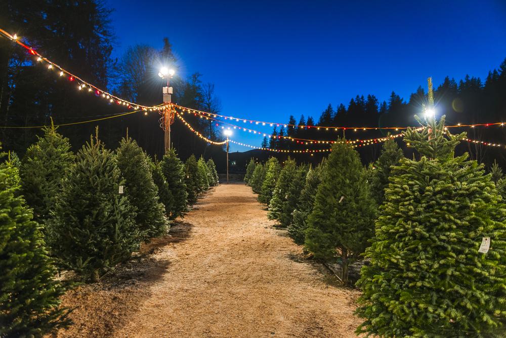 Weltrekord: Ehepaar hat 350 Weihnachtsbäume im Haus