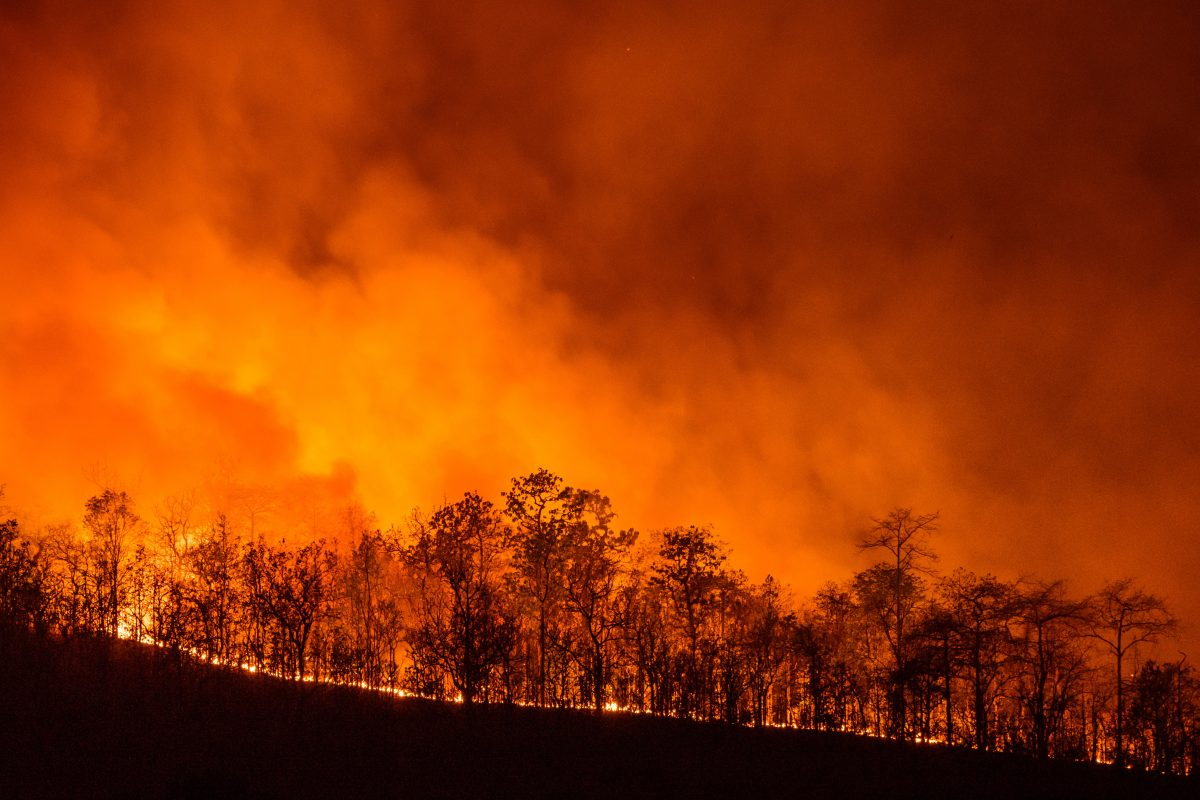 Australien erklärt Ausnahmezustand wegen Waldbränden