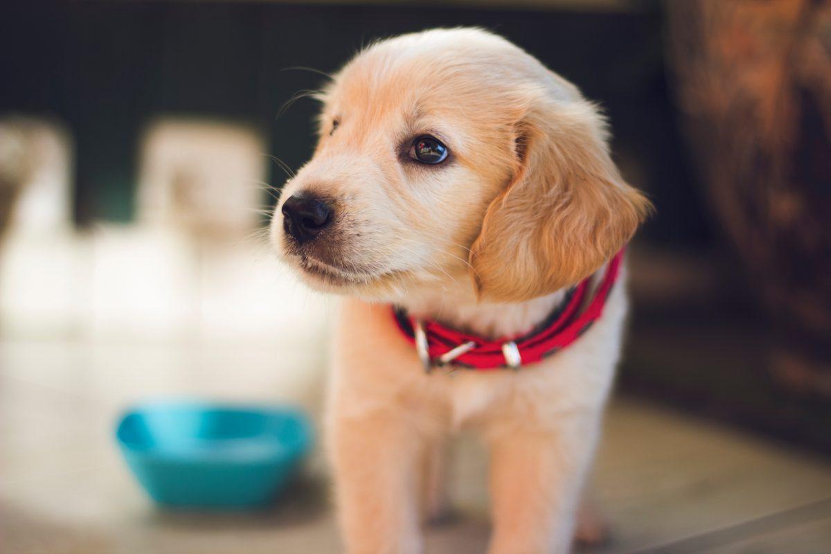 Hund stiehlt Weihnachtsgeschenke von Kindern