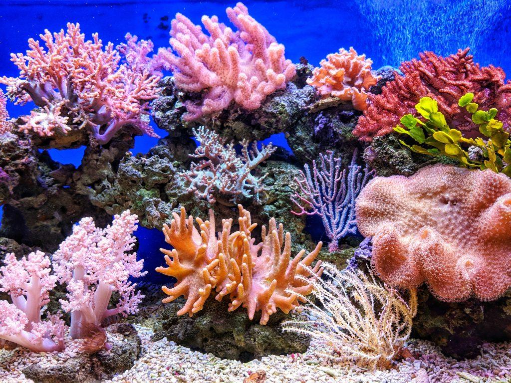 Studie: Unterwasserlautsprecher sollen Korallenriffe retten
