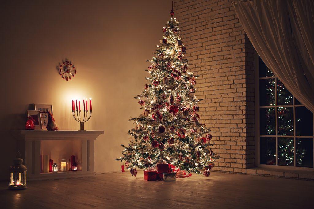 Studie: So viele Insekten leben in einem Weihnachtsbaum