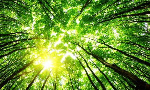 Was macht eigentlich das Umweltbundesamt?