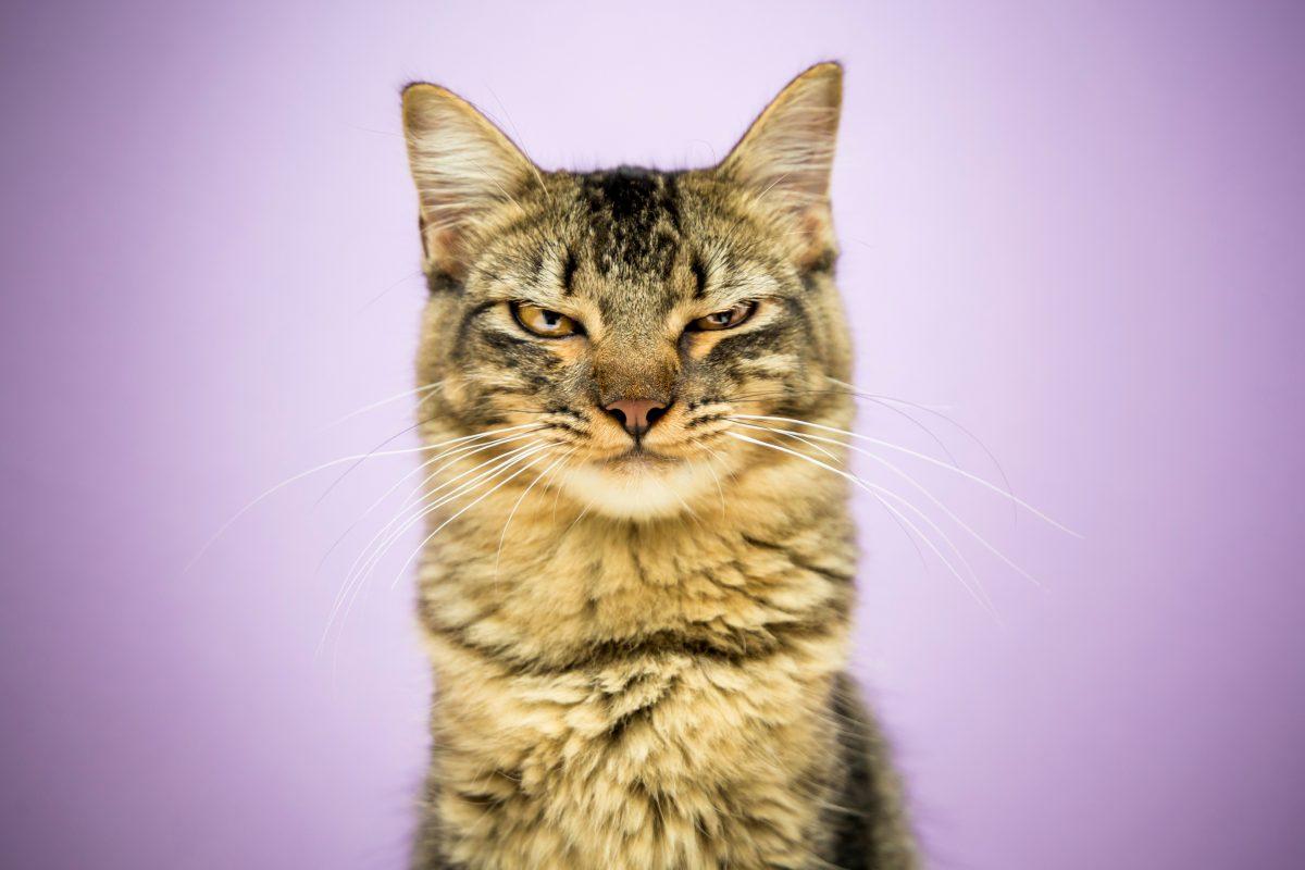 7 Anzeichen, dass deine Katze sauer auf dich ist