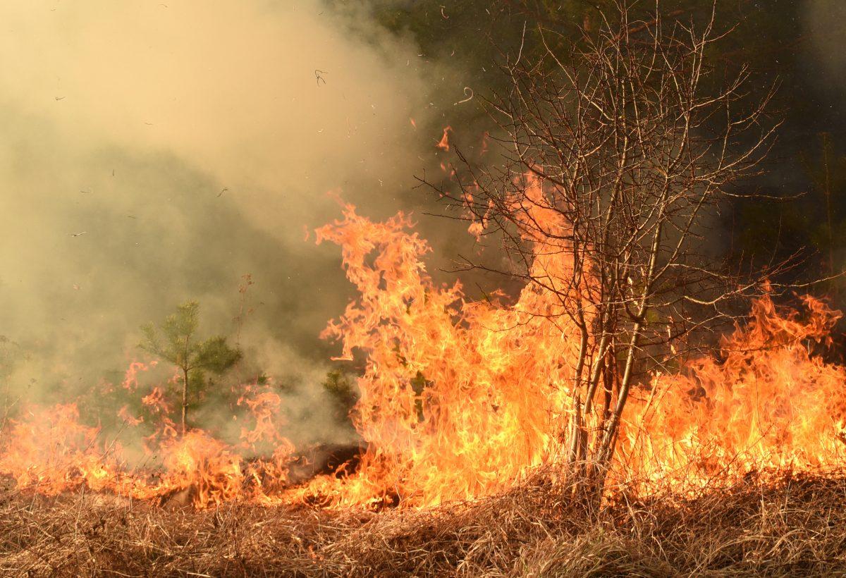 Australien: Urlauber flüchten aus Brandgebieten im Südosten