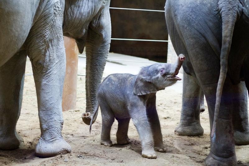 Baby-Elefant in Leipziger Zoo geboren