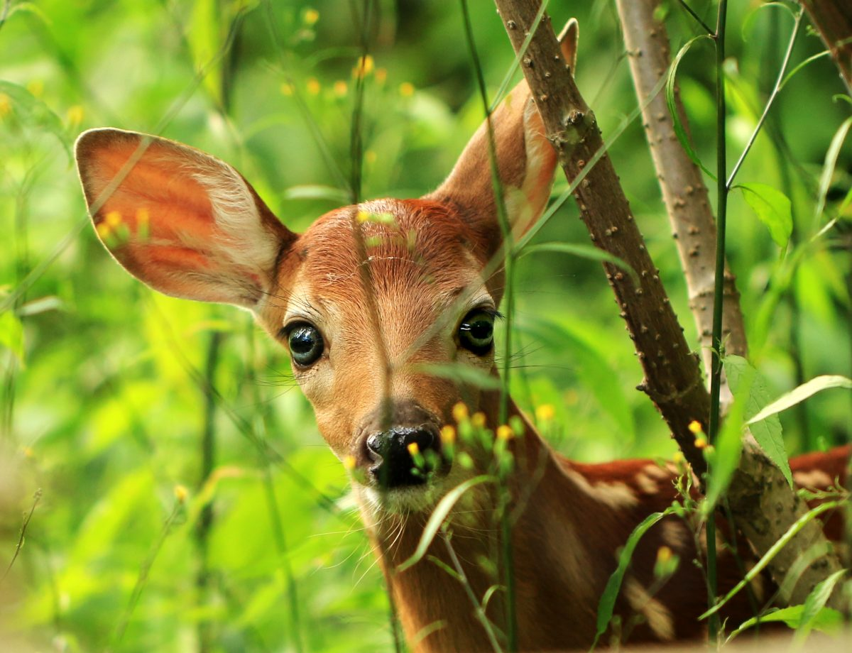 Bambi wird der nächste Disney Live-Action-Film