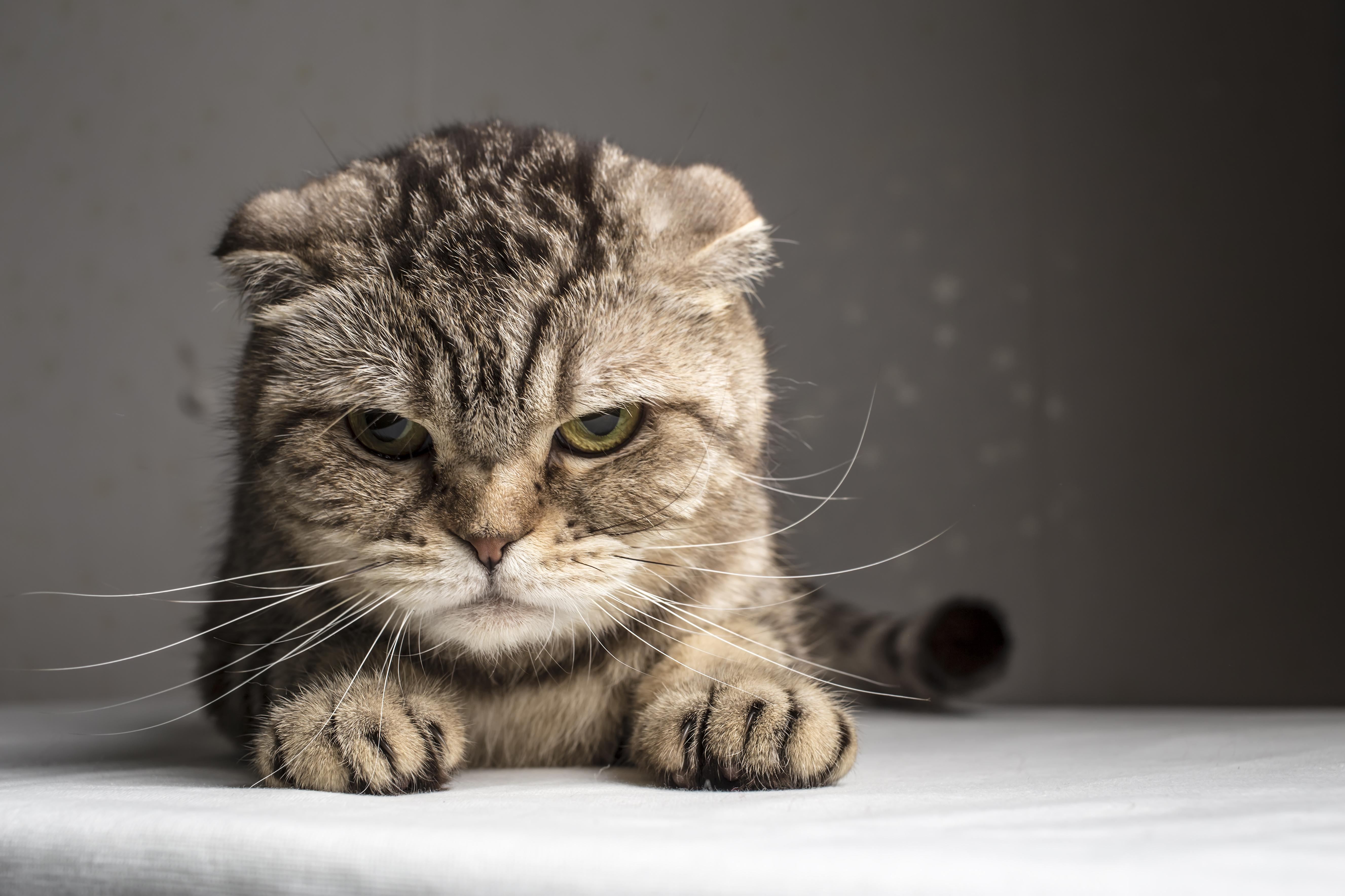 """Die """"schlimmste Katze der Welt"""" steht zur Adoption frei"""