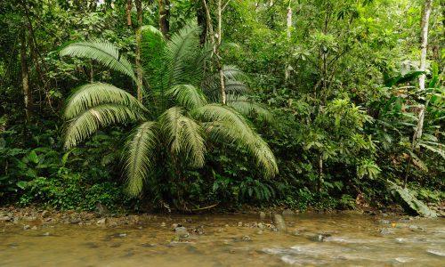 Frau und Kinder nach über einem Monat aus Regenwald gerettet