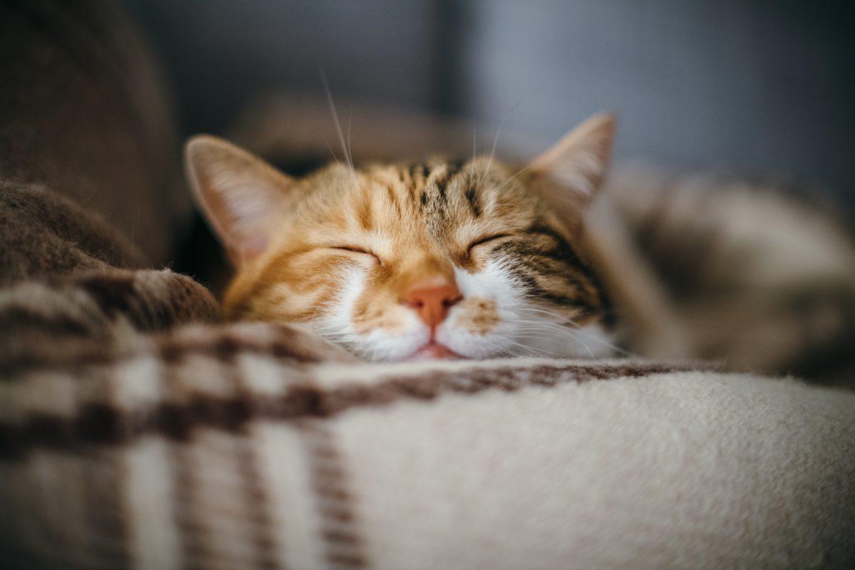 Katze aus Versehen beim Impfen eingeschläfert