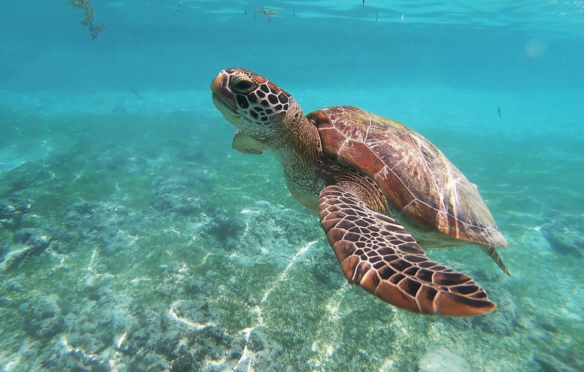 Korallenschutz: Inselstaat Palau verbietet Sonnencremes