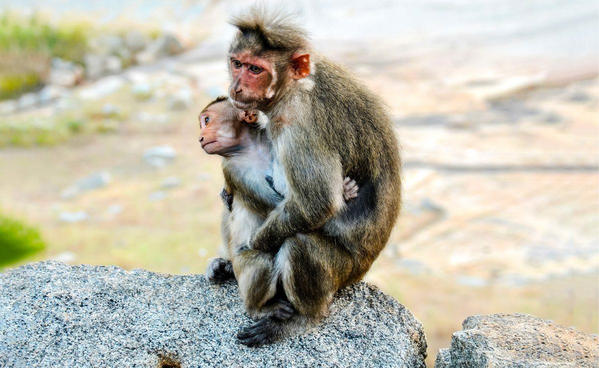 Brand in deutschem Zoo: Alle Tiere im Affenhaus verbrannt