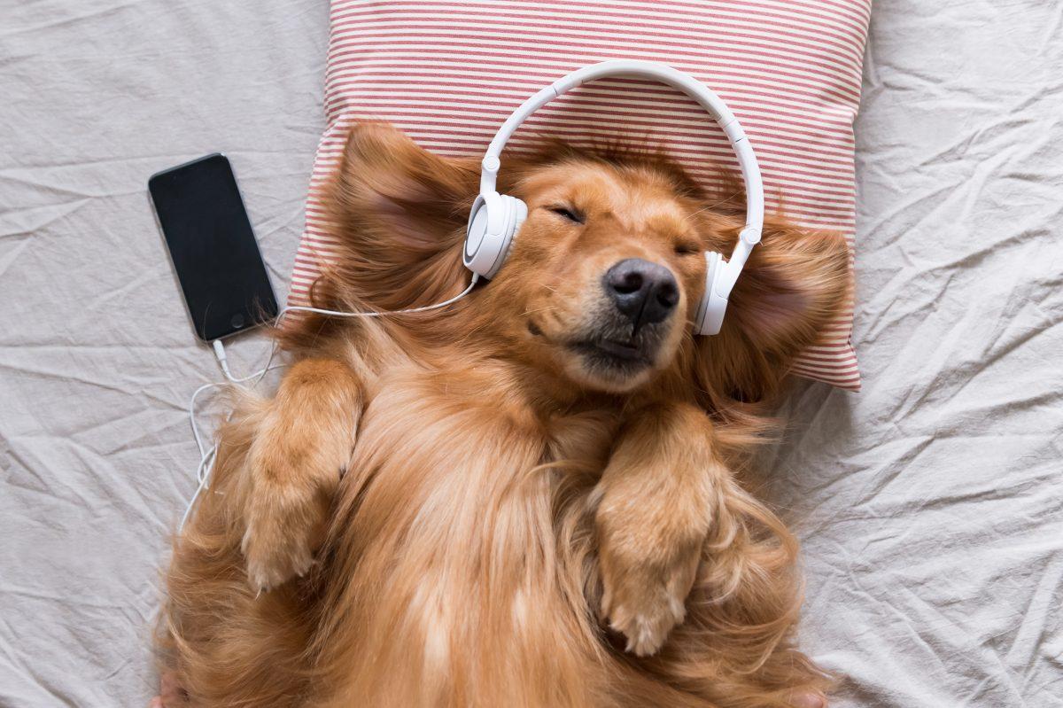 Spotify bietet Playlist für Haustiere an