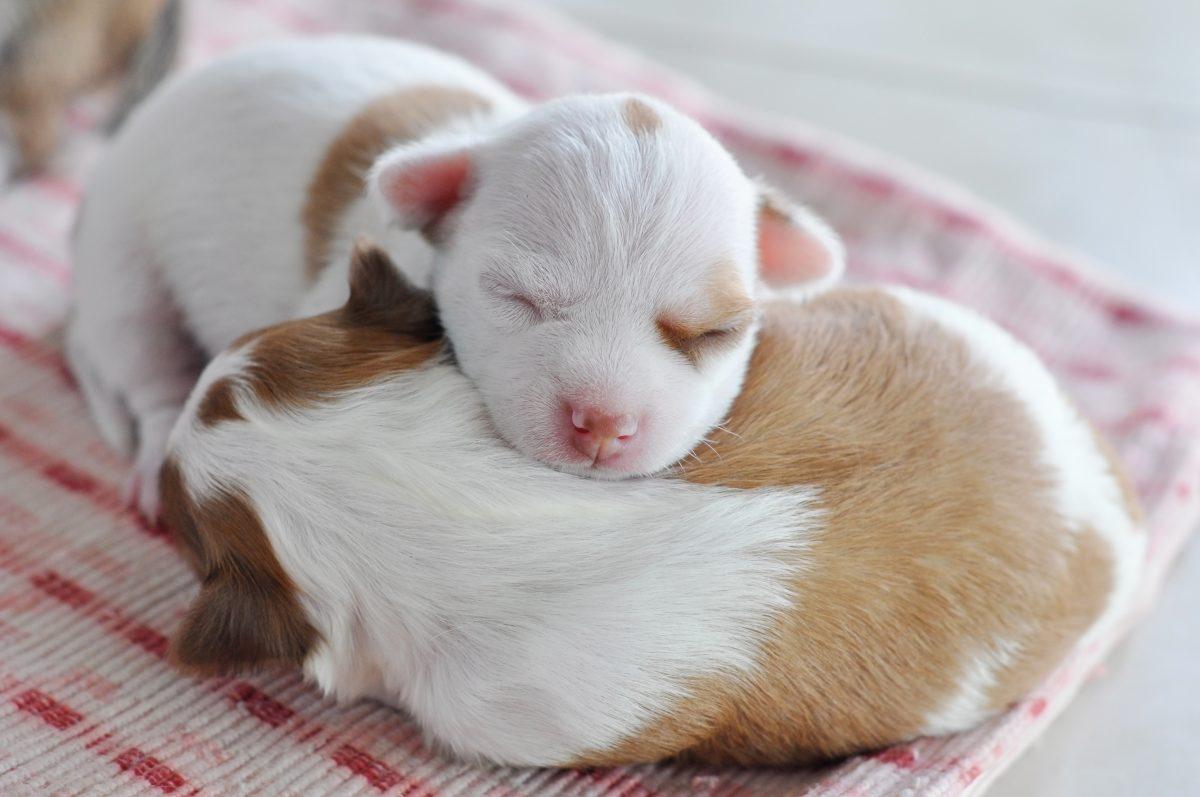 270 Welpen aus Hundefarm befreit: Stimmbänder durchgeschnitten