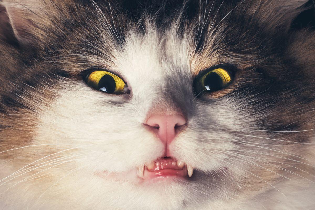5 Anzeichen, dass deine Katze dich insgeheim hasst
