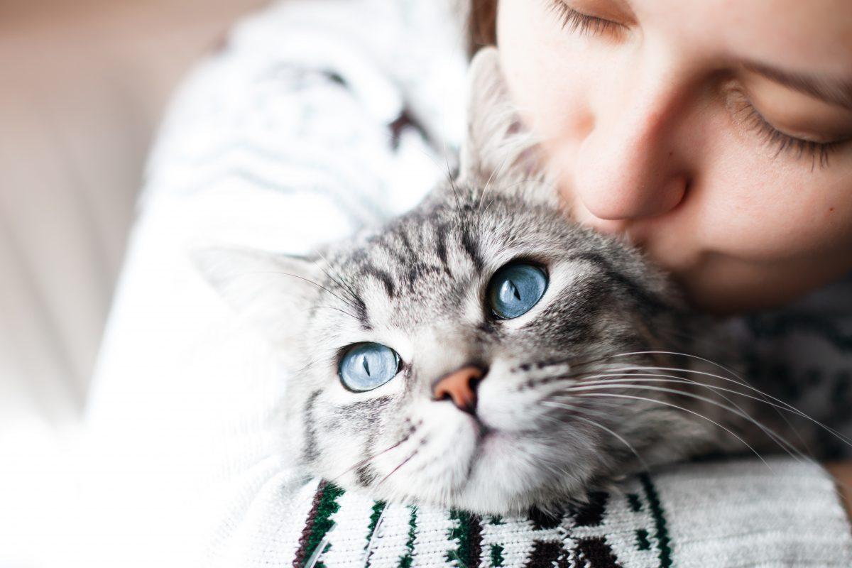 7 Anzeichen, dass deine Katze dich liebt