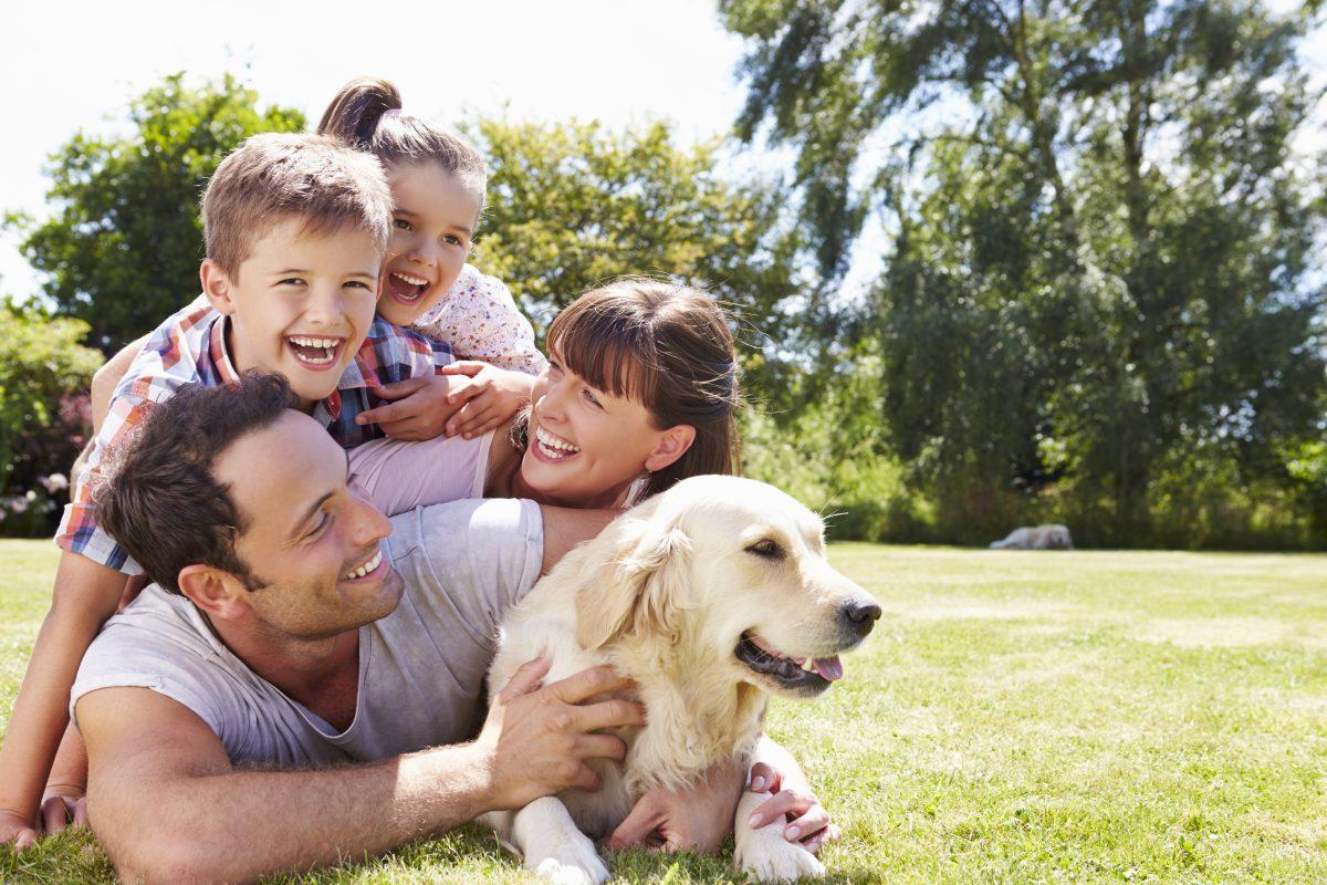 Hund wird nach 14 Jahren wieder mit Familie vereint