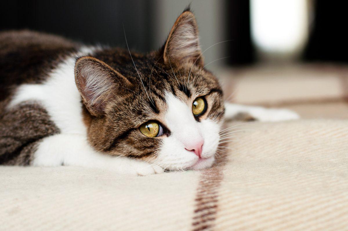 4 Anzeichen, dass deine Katze traurig ist