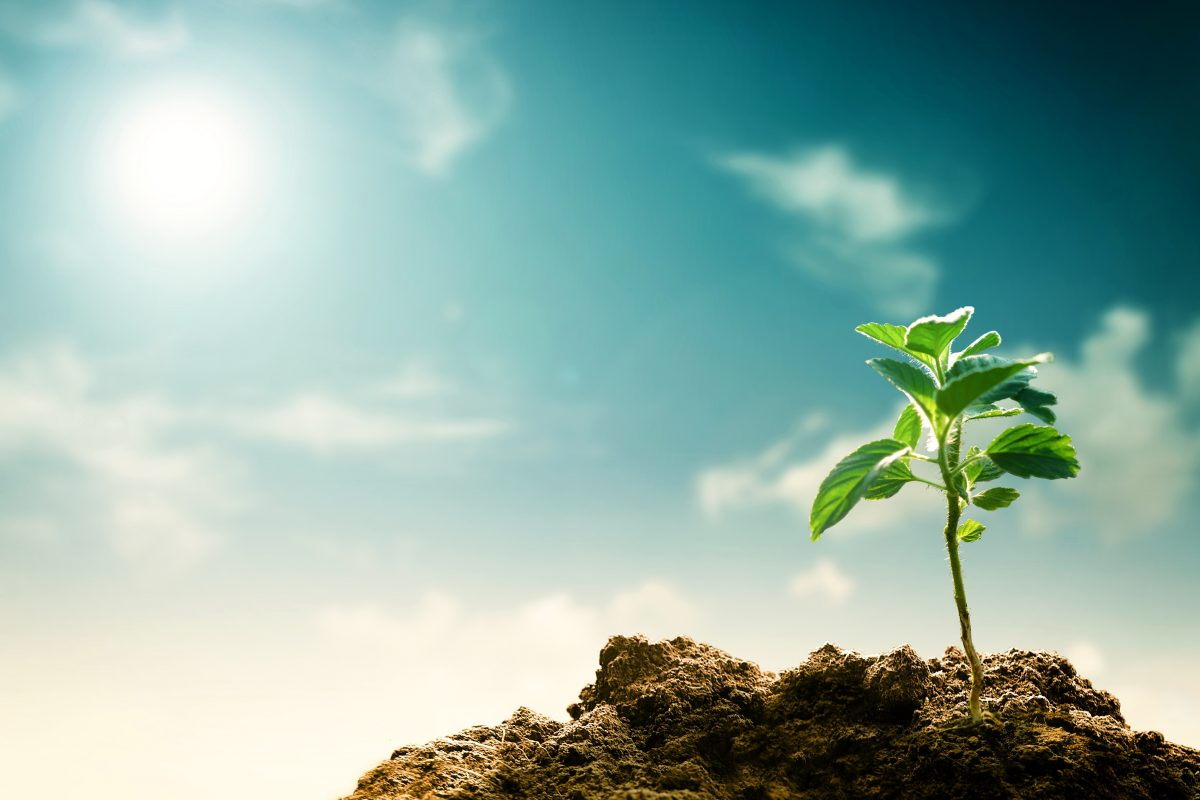 Pflanzen blühen wegen Erderwärmung immer früher