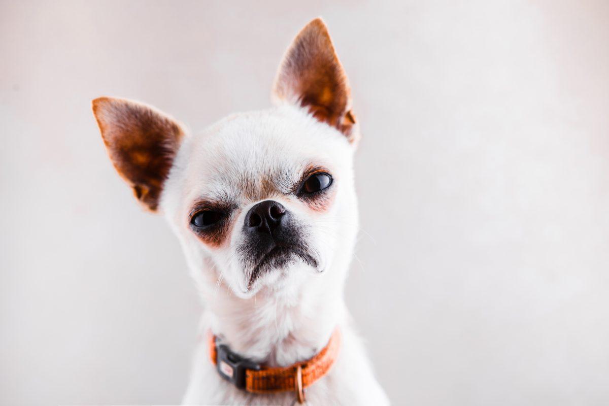 8 Anzeichen, dass dein Hund sauer auf dich ist