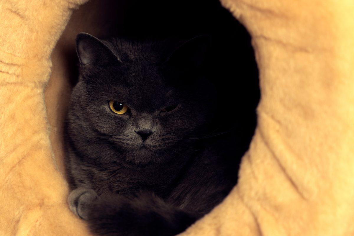 4 Anzeichen, dass deine Katze eifersüchtig auf deinen neuen Freund ist