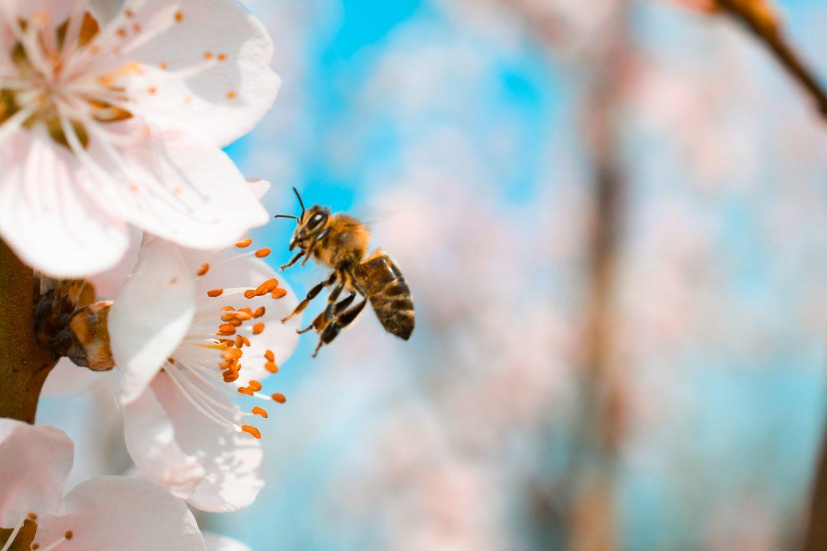 Bienen haben verschiedene Dialekte