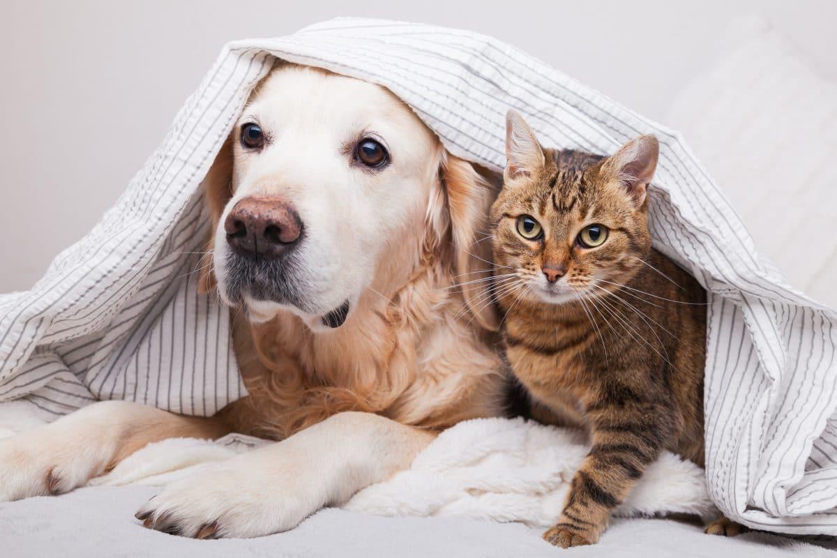 Coronavirus: Das müssen Haustier-Besitzer beachten