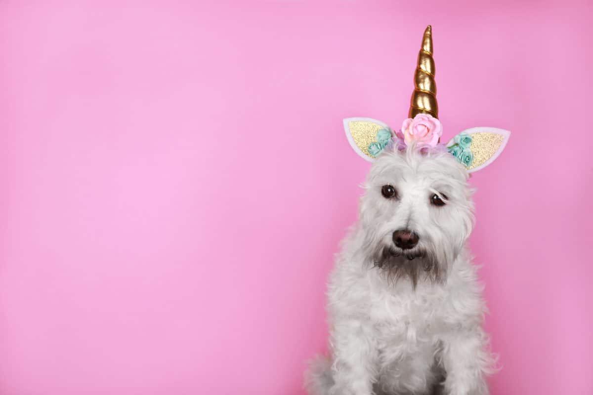 Dieser Hund hat ein Ohr mitten auf dem Kopf und sieht aus wie ein Einhorn