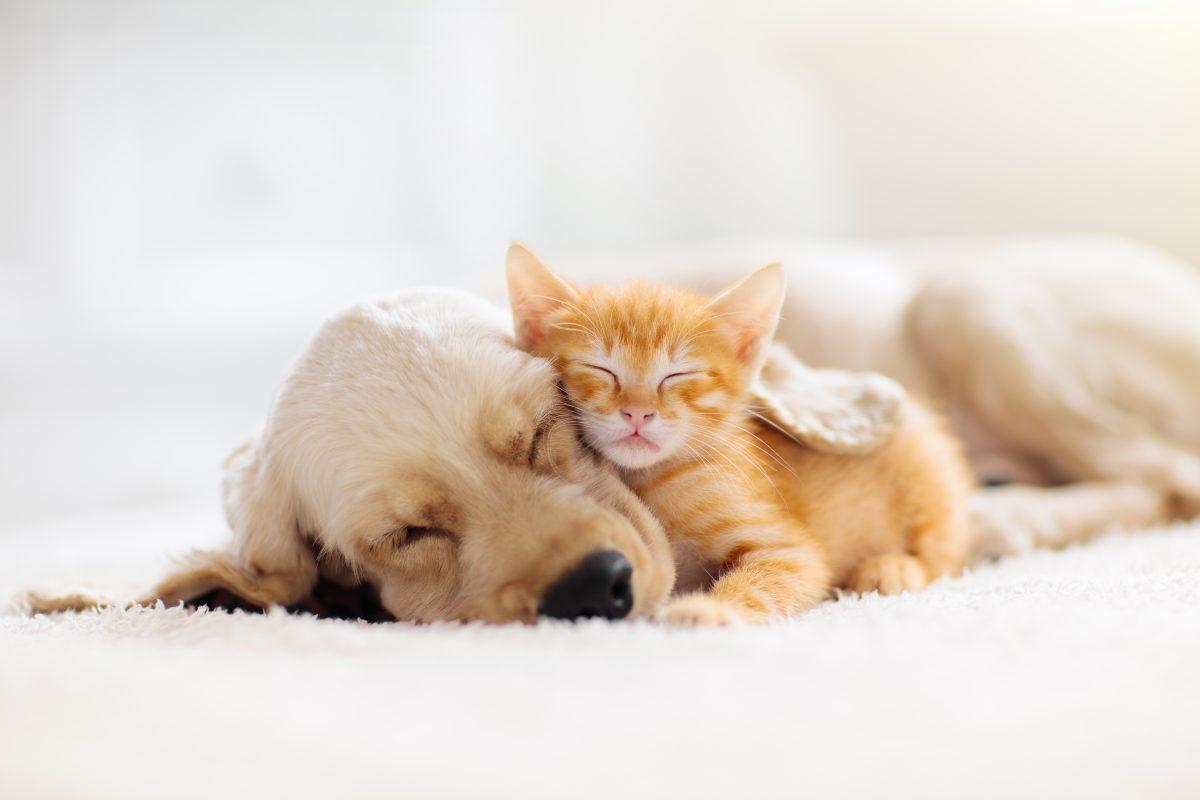 Hunde oder Katzen: Wer ist intelligenter?