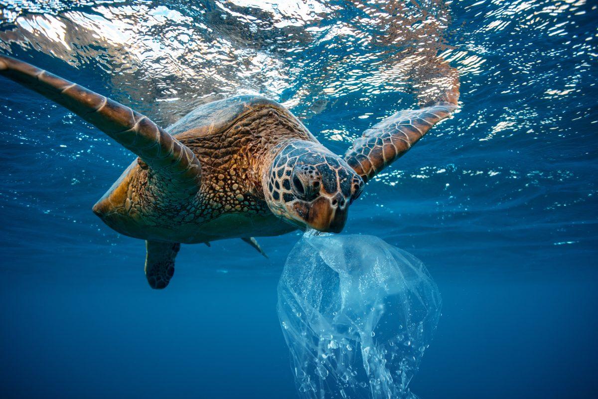 Plastik riecht für Schildkröten wie Nahrung