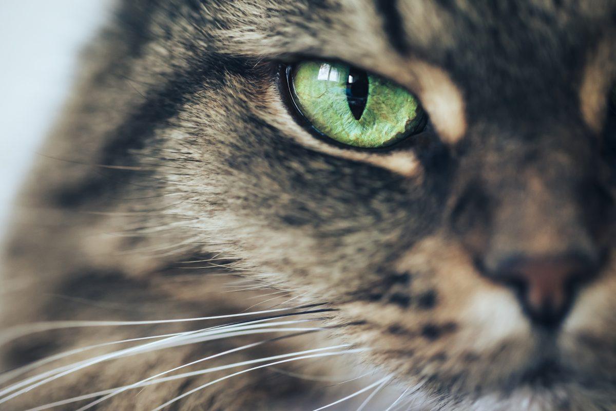Katzen: Was denken sie über uns?