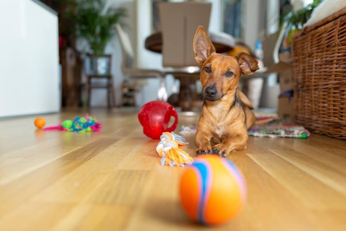 8 Ideen um deinen Hund Indoor zu beschäftigen