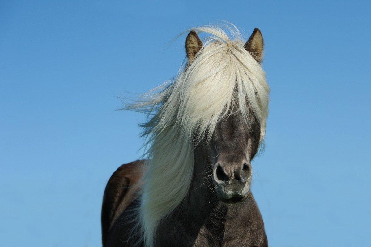 Pony nachschneiden: So bekommst du es selbst hin