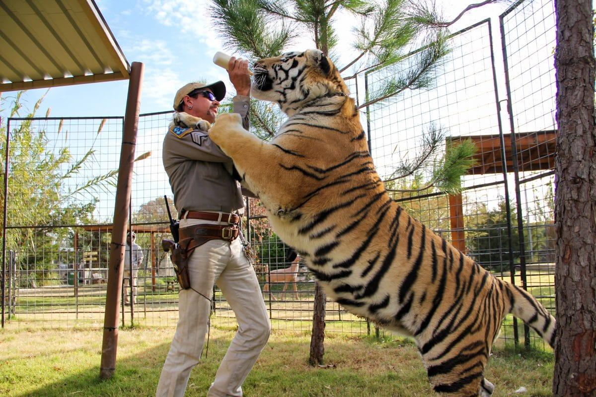 Donald Trump will Tiger King Joe Exotic begnadigen