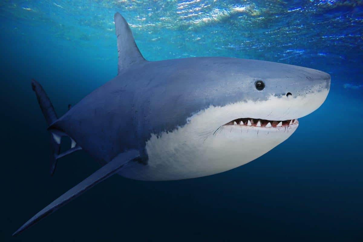 Hai-Angriff in Australien: 23-Jähriger am Great Barrier Reef getötet