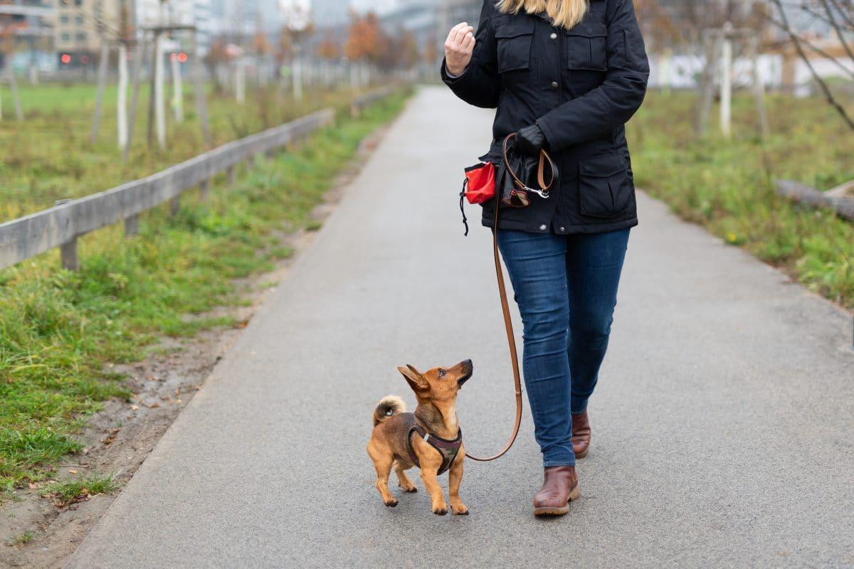 Haustierbesitzer in Quarantäne: App vermittelt Nachbarschaftshilfe