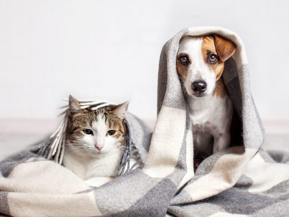 Katzen können an Corona erkranken, Hunde eher nicht