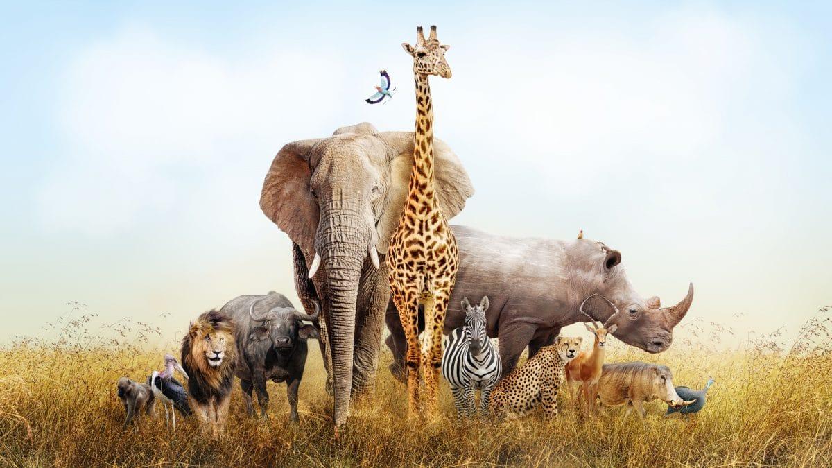 Naturparks in Afrika begeistern mit Online-Safaris