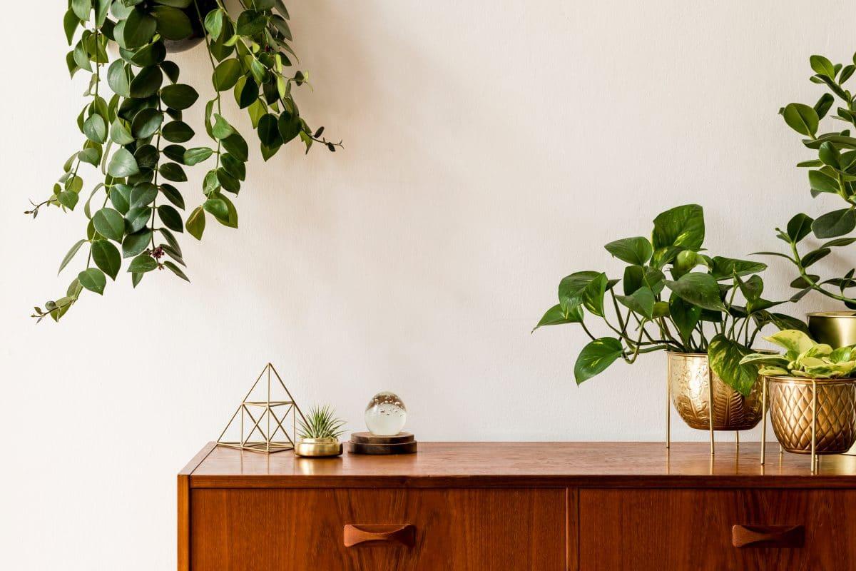 Pflanzen für daheim: So gestaltest du dir deinen Urwald während der Quarantäne